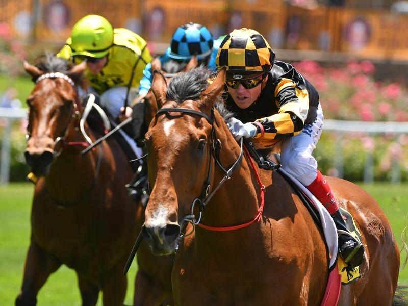 David Jolly is hoping a win in the Group One Memsie Stakes will prove more than adequate compensation for missing the Queensland winter with his giant galloper Behemoth.